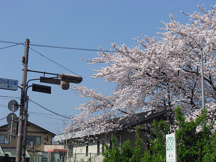 20090407sakura