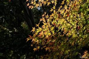 京都嵯峨野