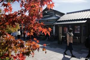京都嵐山-もみじ