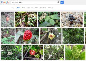 つぶつぶ 山 植物